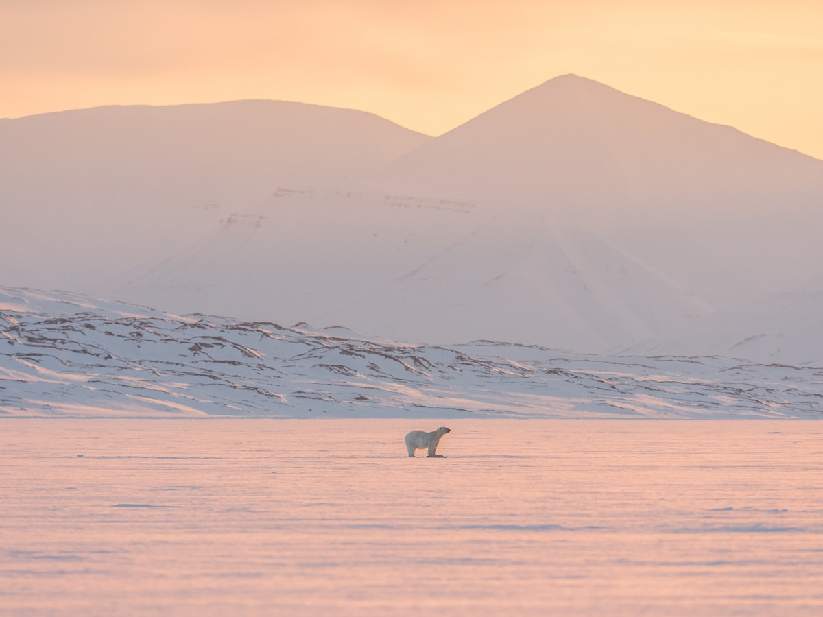 Adventure Holiday in the Arctic