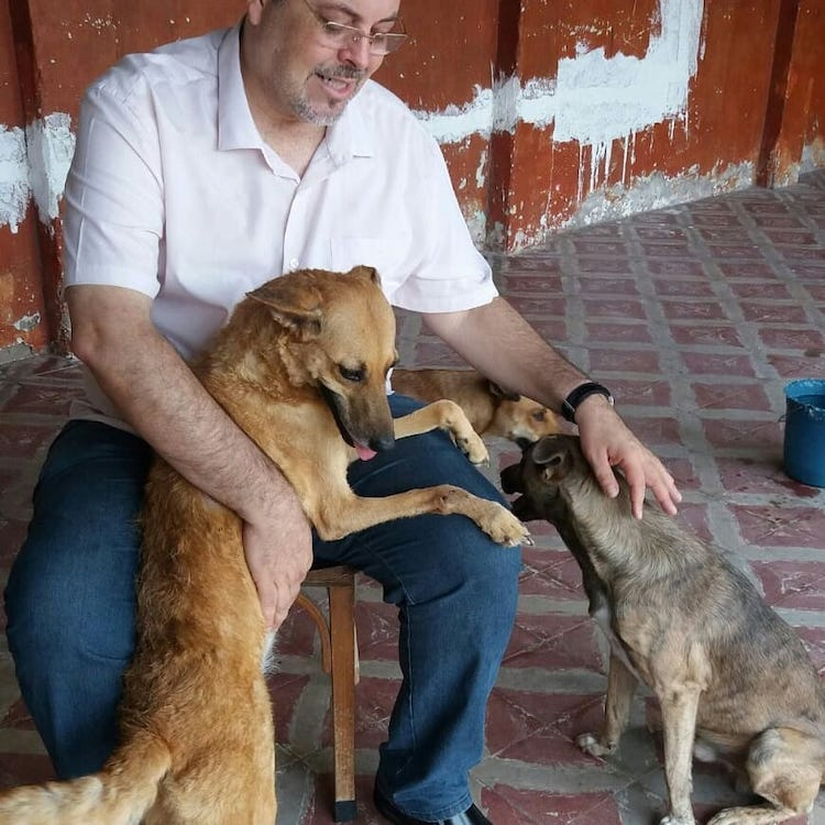Priest Petting Stray Dogs
