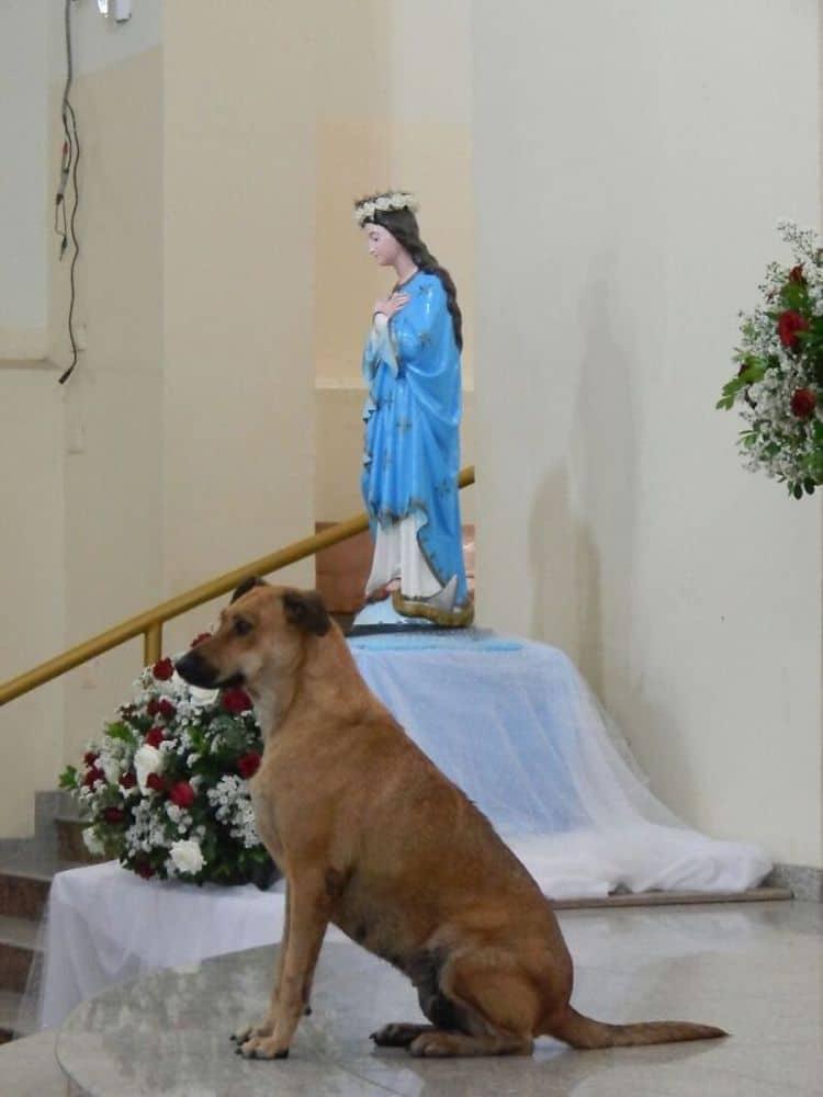 padre perros callejeros brasil