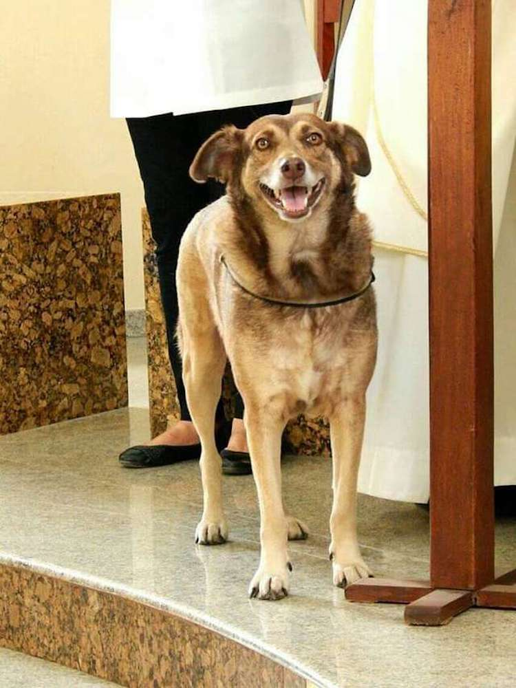 sacerdote perros callejeros brasil