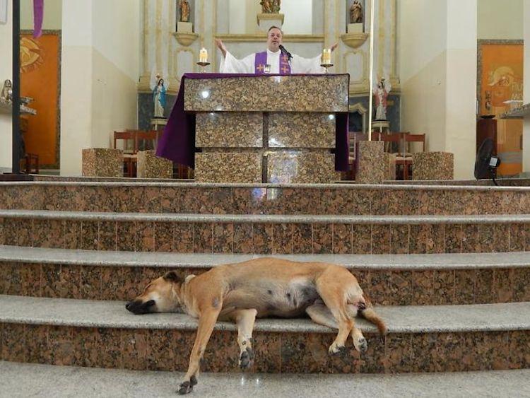 perros callejeros historia tierna