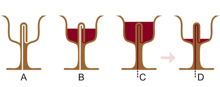 Diagram Showing How the Cup of Justice by Pythagoras Works