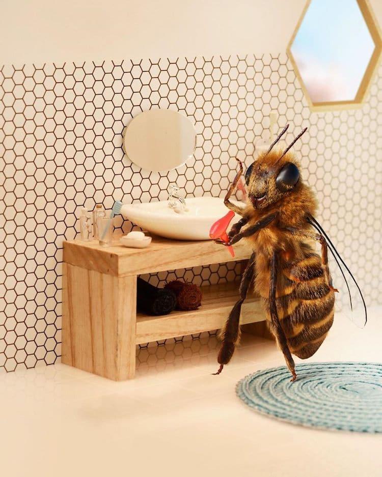 Influencer para salvar a las abejas