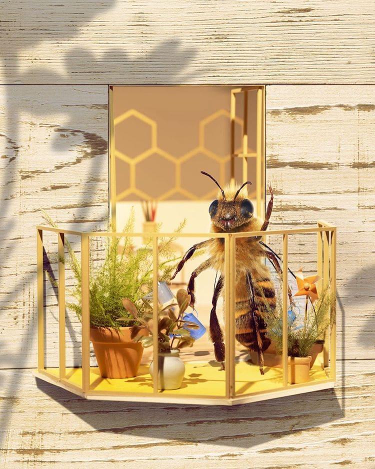 Influencer para salvar a las abejasr