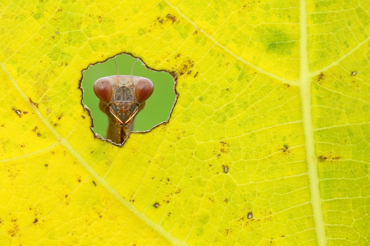Bug Looking Through Leaf