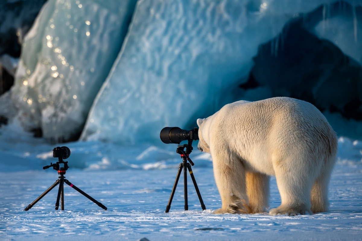 Oso polar viendo a través de una cámara