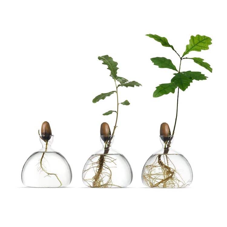 Acorn and Avocado Tree Glass Vase by Ilex Studio
