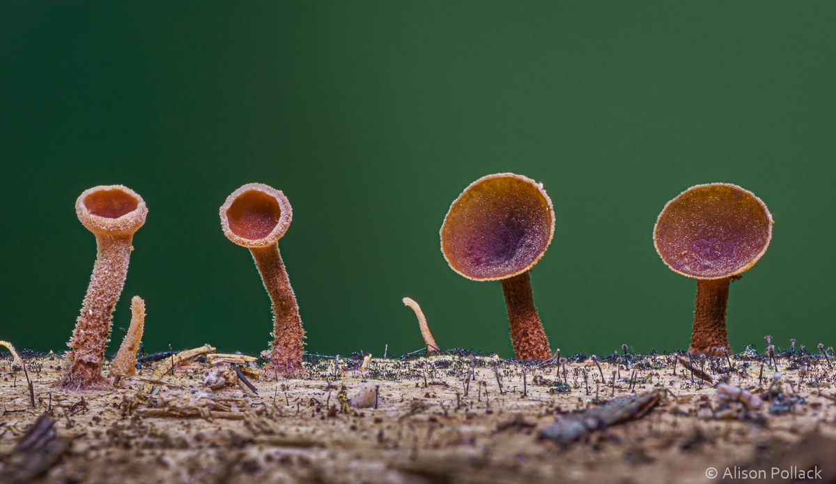 Artistic Photograph of Mushrooms on a Log