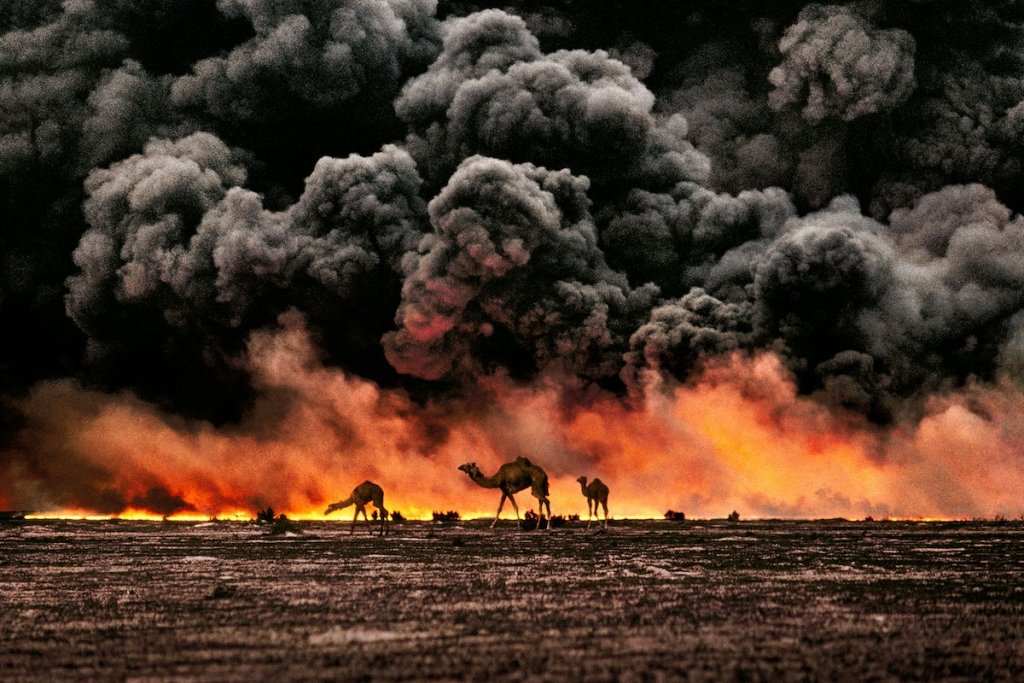 Camels Amid Burning Oil Field in Kuwait by Steve McCurry