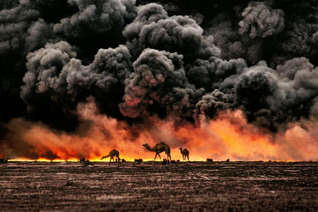 camellos en kuwait por Steve McCurry
