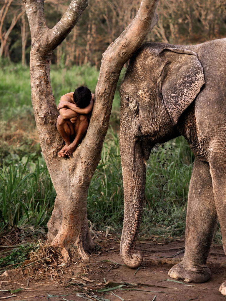 Mahout and His Elephant at a Sanctuary. Chiang Mai by Steve McCurry