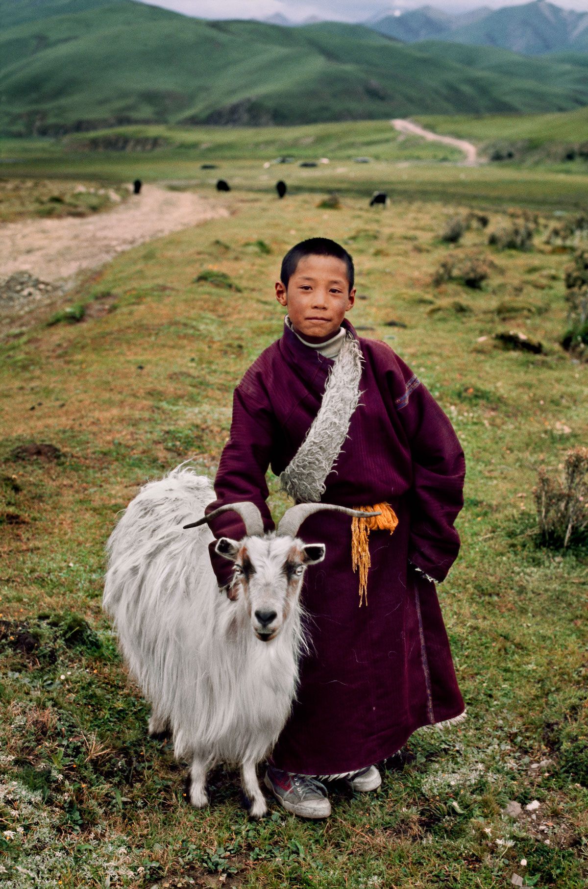 Young Tibetan Nomad with his Goat by Steve McCurry