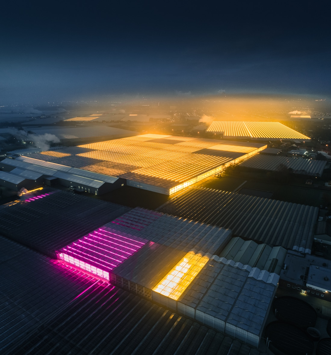 Greenhouses Using LED Light in Holland