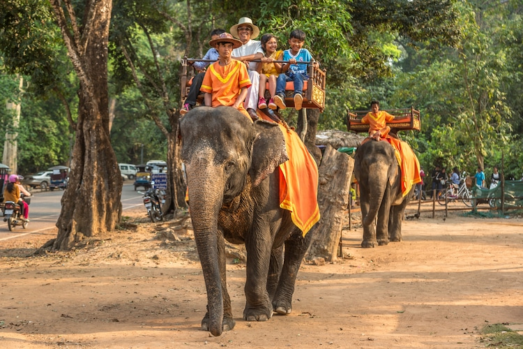 Elephant Rides Banned at Angkor Wat
