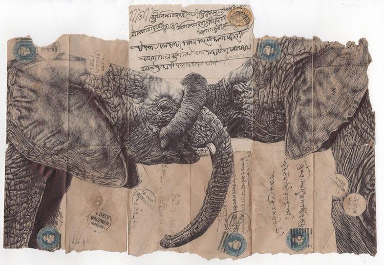 Dibujos de animales de Mark Powell