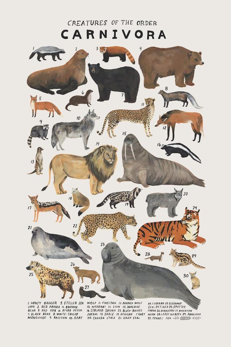 Poster del orden de los animales