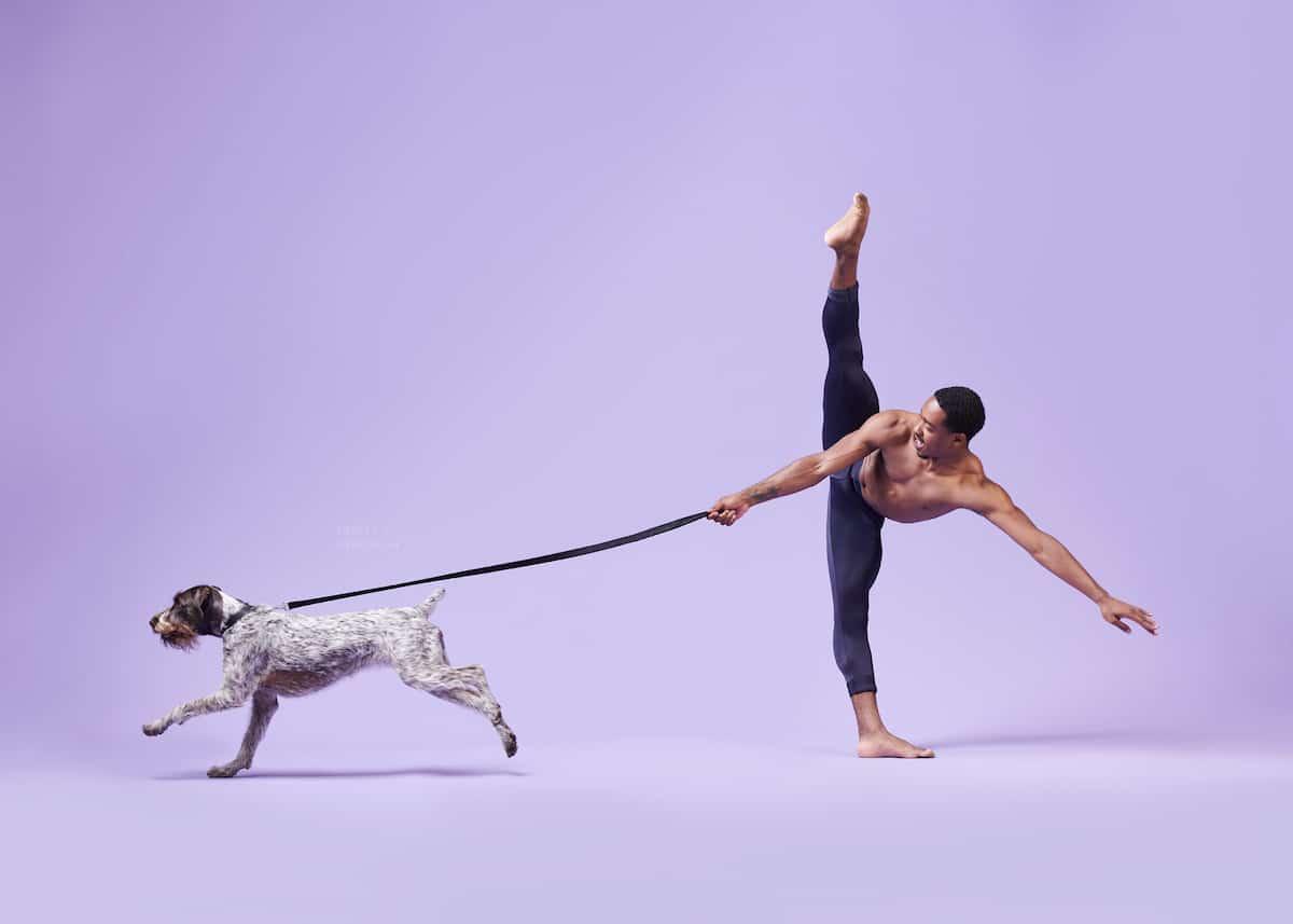Fotos creativas de perros