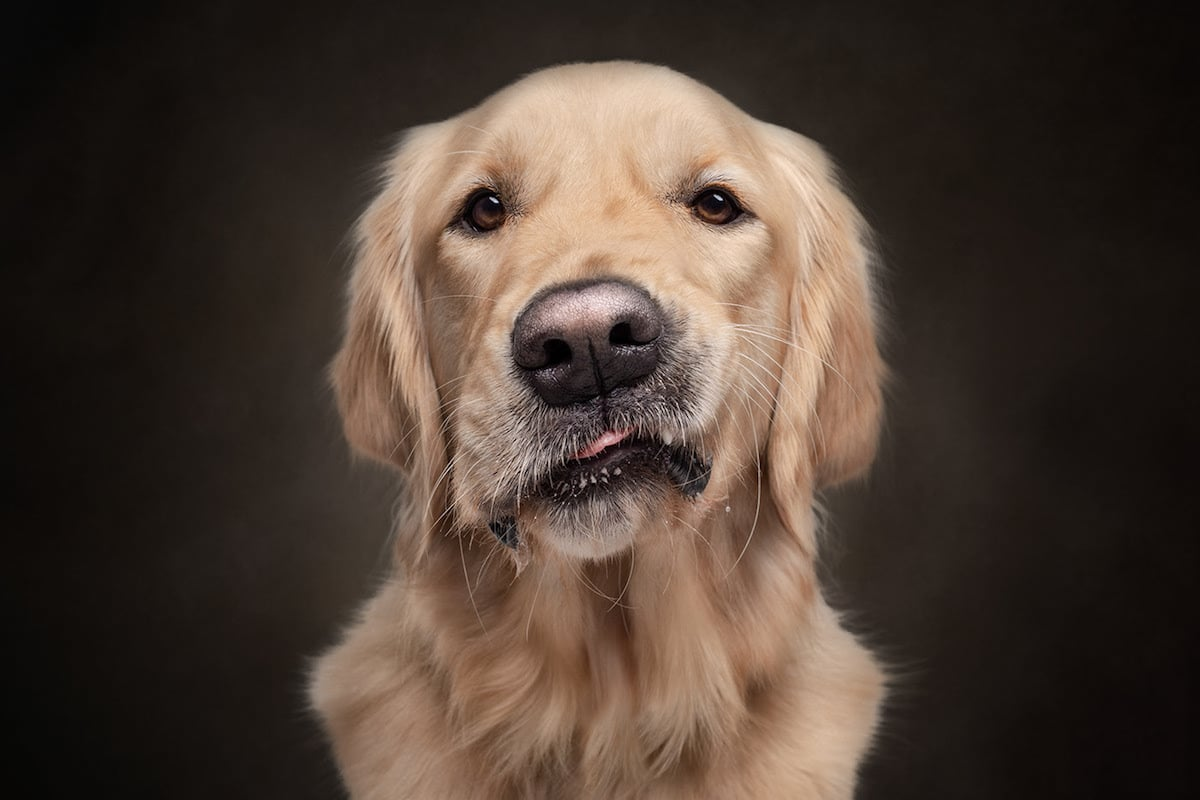 Dogs Are The Best People Dog Photo Series by Frog Dog Studios