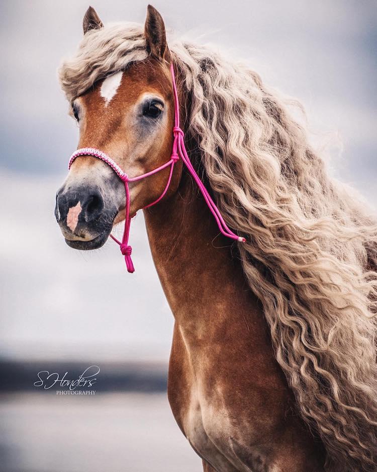 caballo con cabello