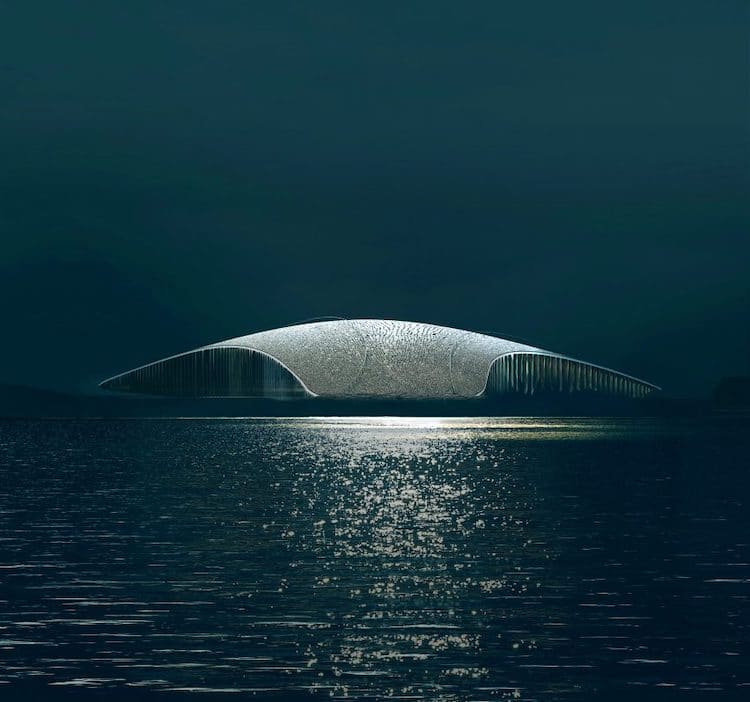 The Whale por Dorte Mandrup