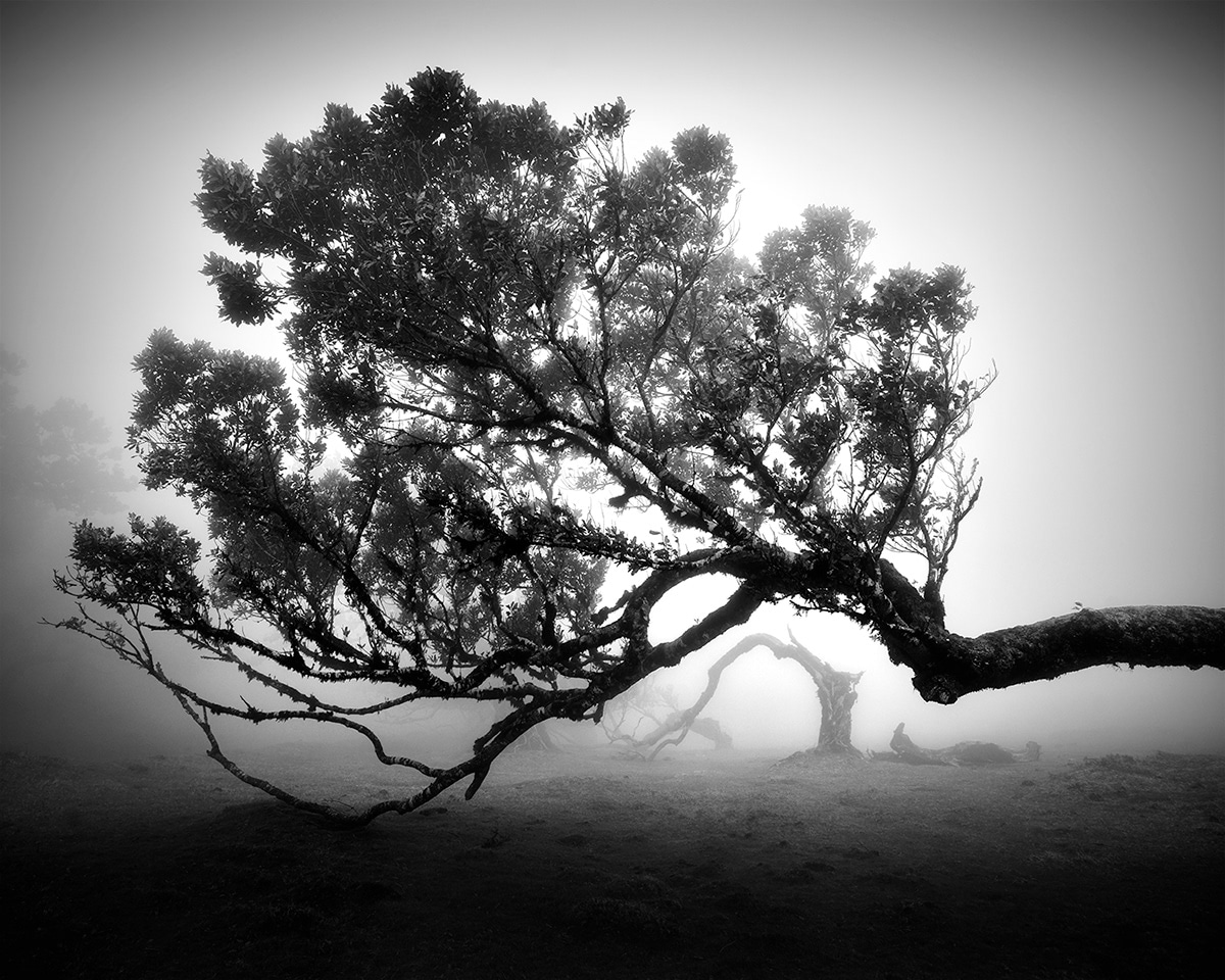 Tree Photos Fanal Series by Michael Schlegel