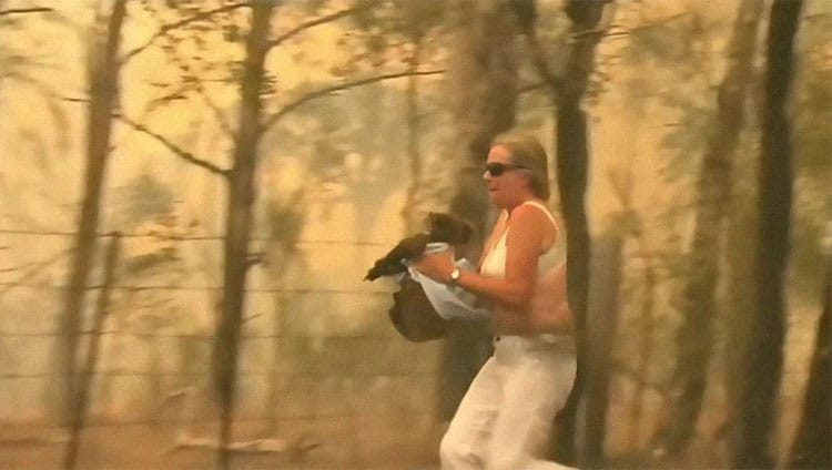 Woman Saves Koala from Bushfire