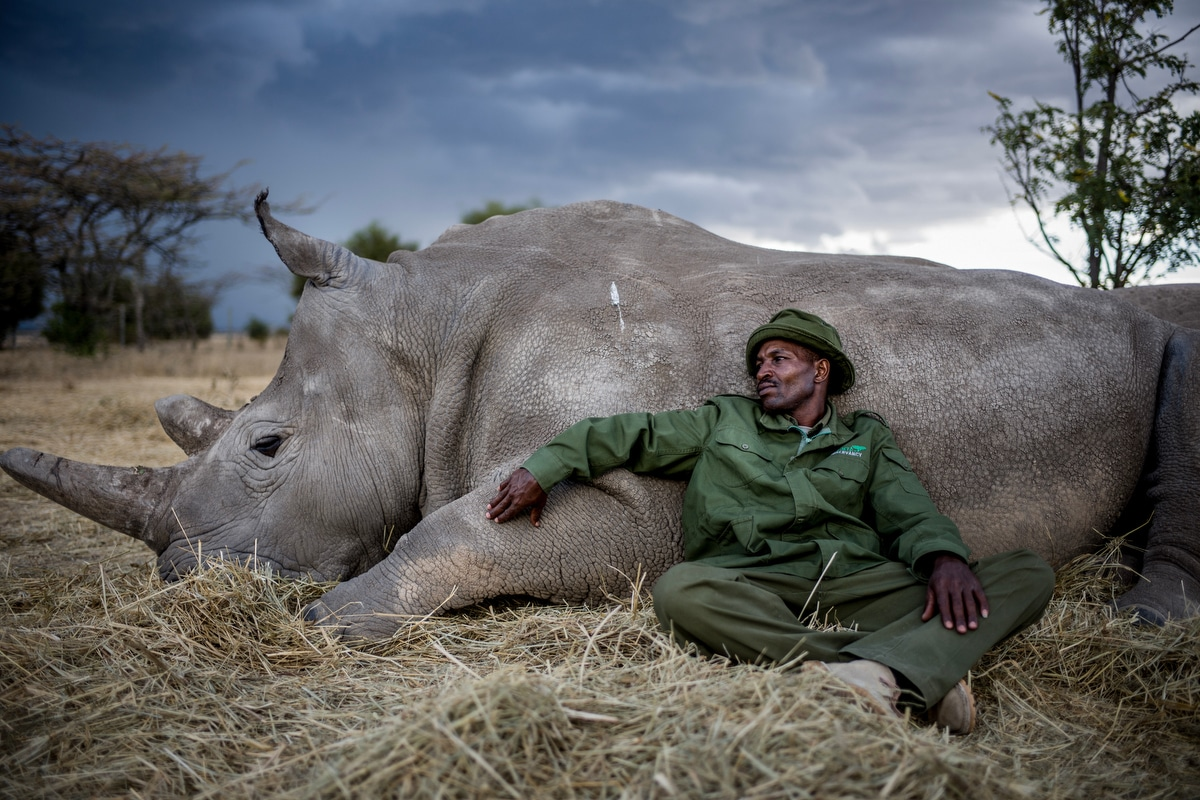 Last Northern White Rhino by Justin Mott