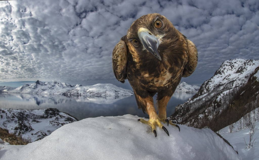 fotos de vida silvestre