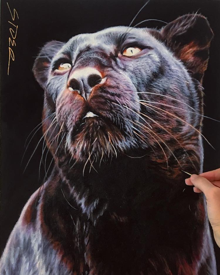 Animal Paintings by Nick Sider
