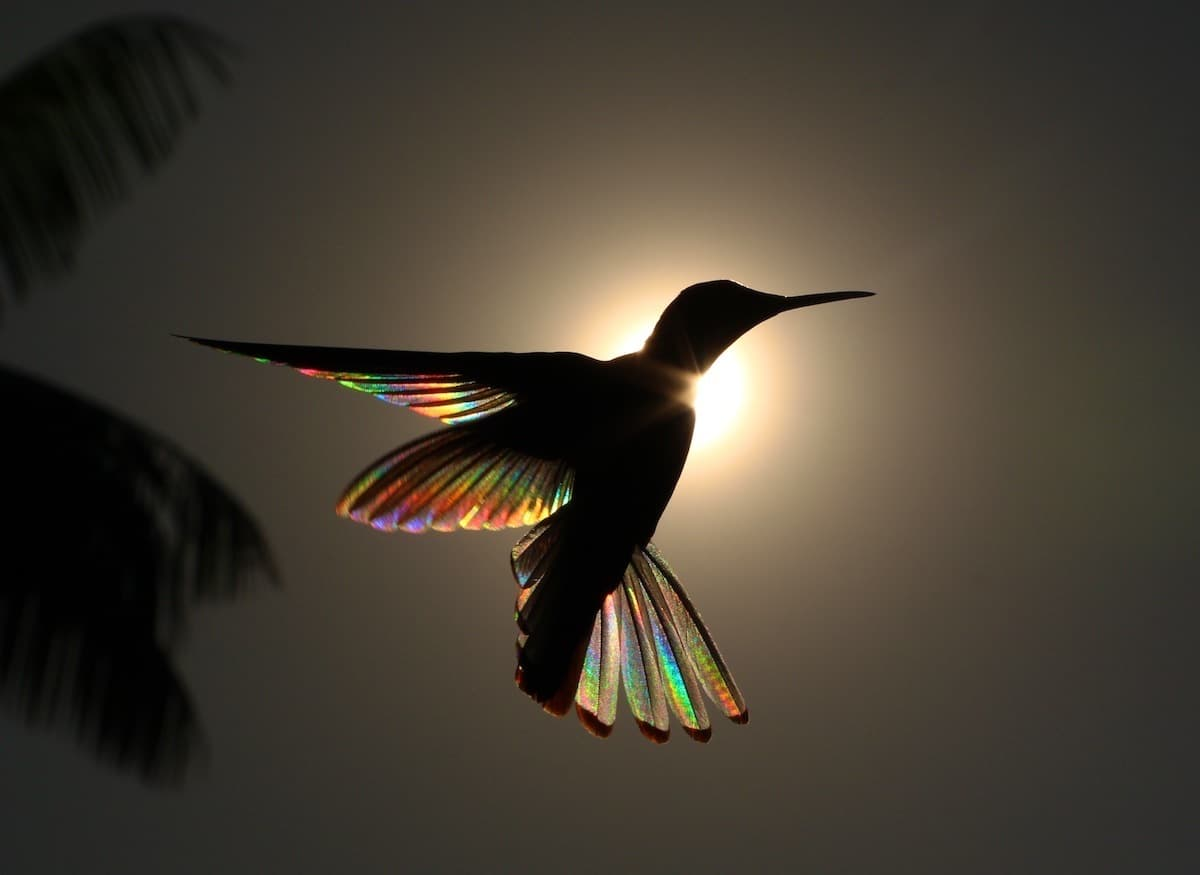Hummingbird Photography by Christian Spencer