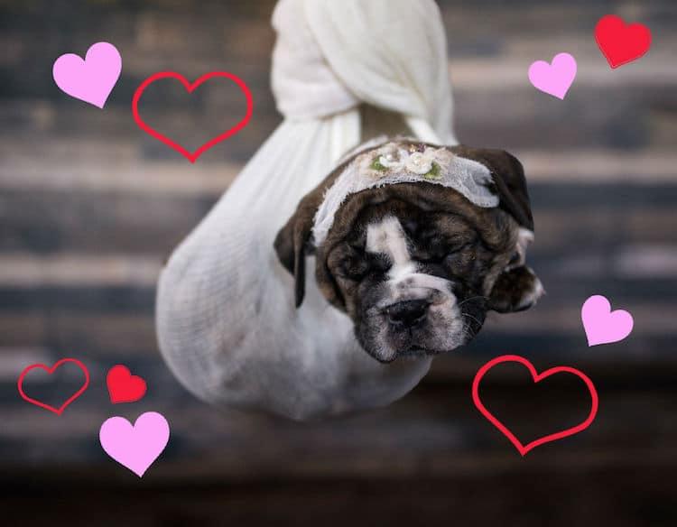 Dad Bods Rescue Dogs 2020 Calendar