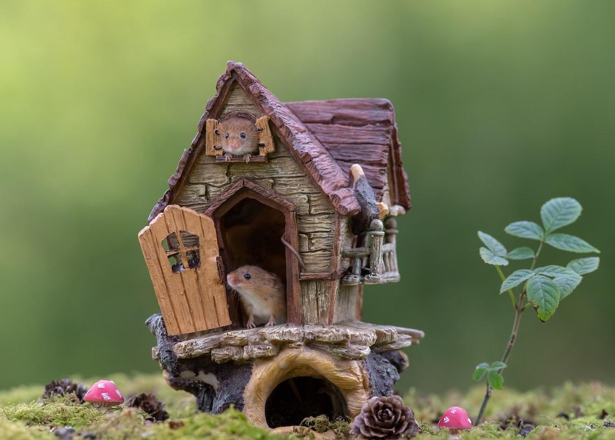 Ratones en una casa