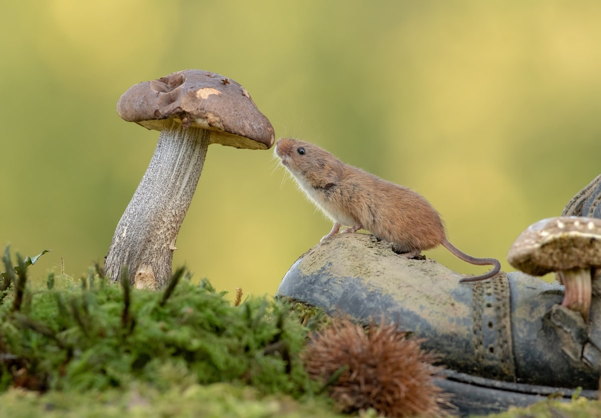 Fotos de ratones por Dean Mason