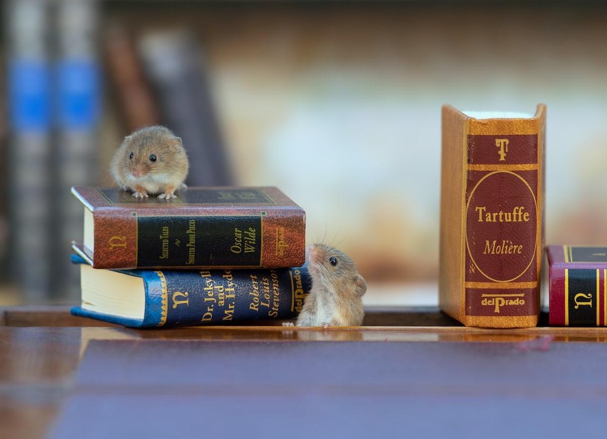 Foto de ratones espigueros por Dean Mason