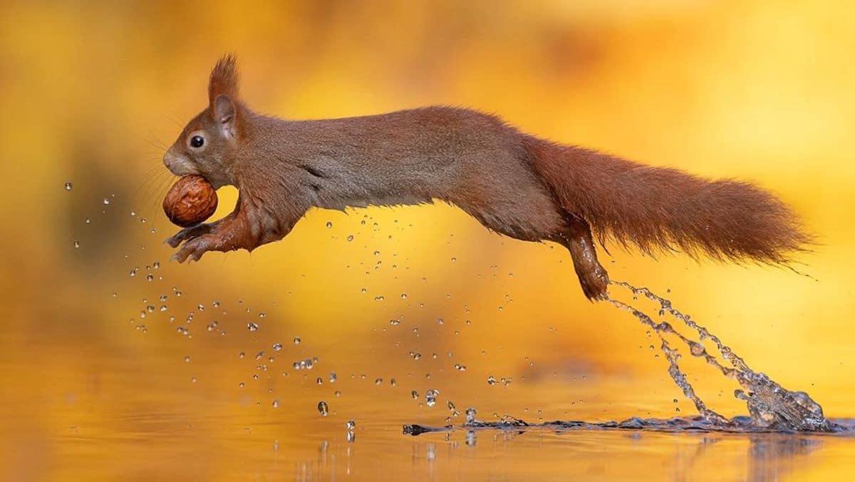 Cute Squirrel Photos by Dick van Duijn