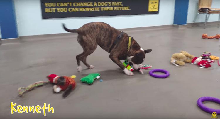 Perros rescatados en Irlanda eligen su propio regalo de Navidad