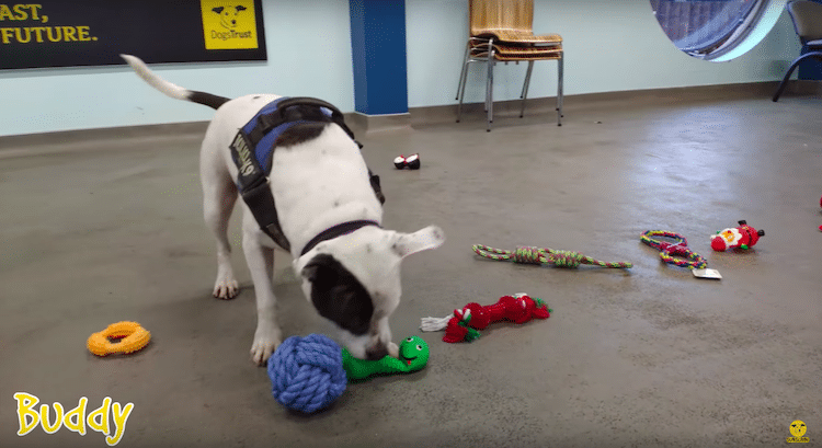 Shelter Dogs in Ireland Pick Their Christmas Gifts