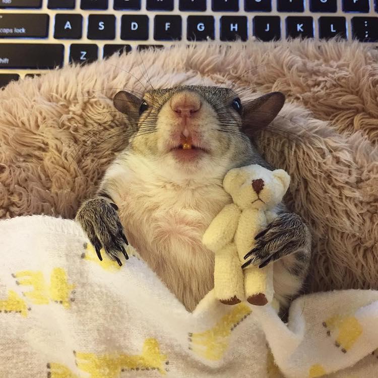 Jill the Squirrel