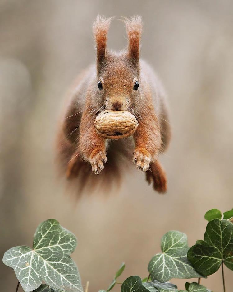 Julian Rad Wildlife Photography