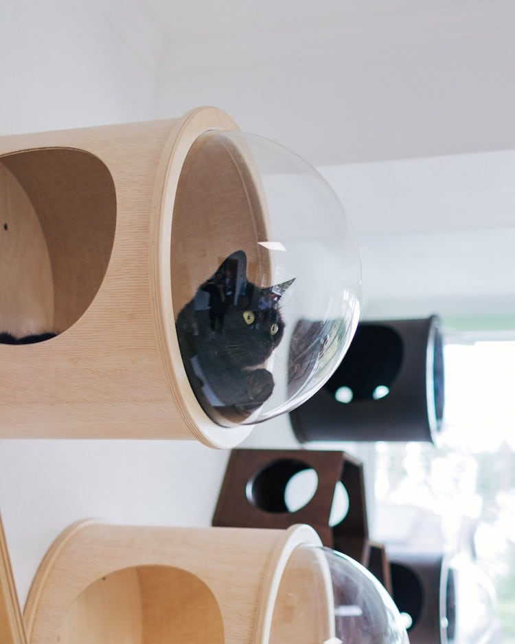 innovative modern cat furniture | Modern Cat Furniture Doubles as Stylish Modular Wall Art