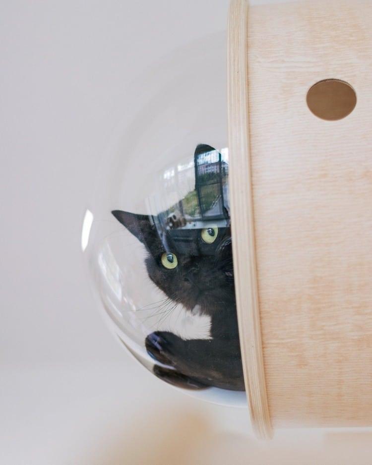 Modern Cat Furniture by PetsHelperCo