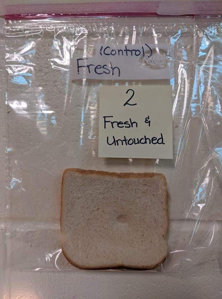 Moldy Bread Science Experiment