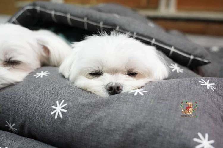 Puppies Napping