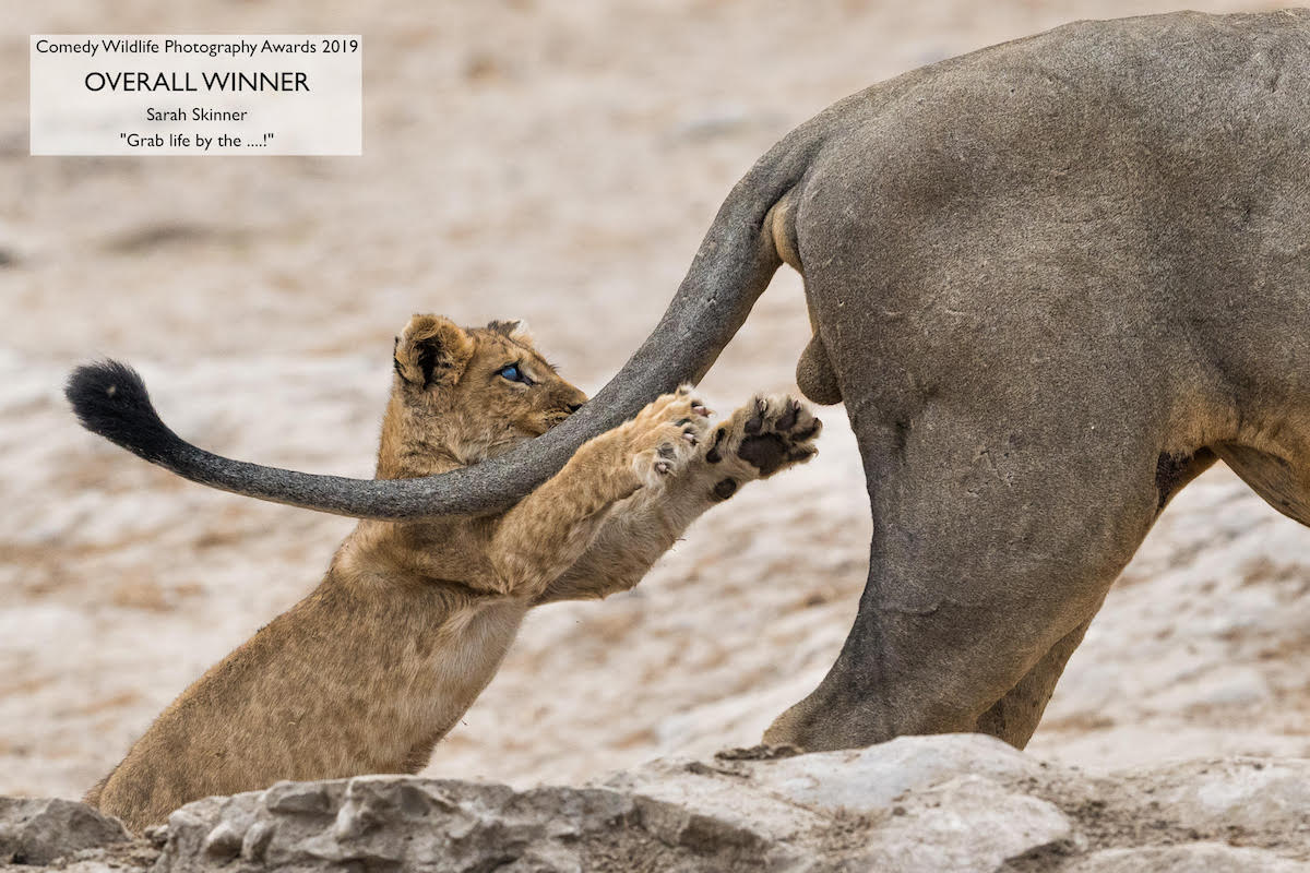 Comedy Wildlife Photography Awards Sarah Skinner