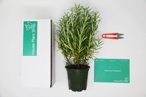 House Plant Subscription Box