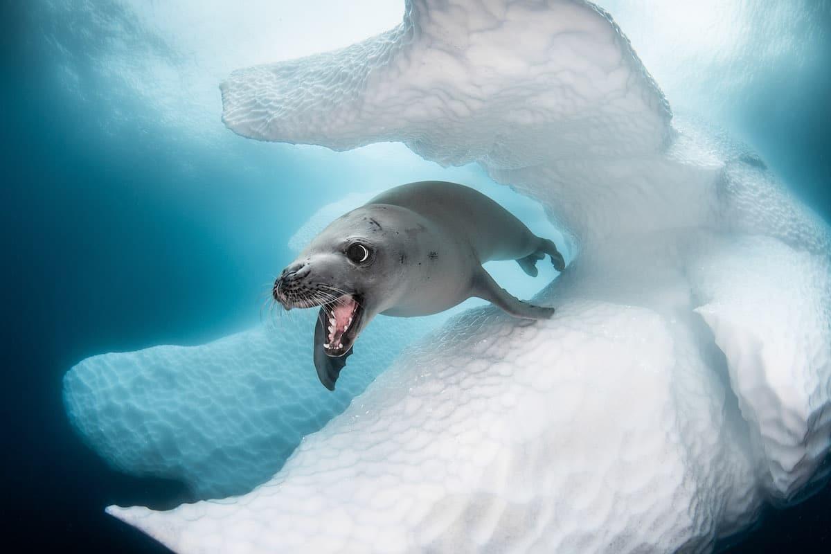 Greg Lecoeur Award Winning Underwater Photography