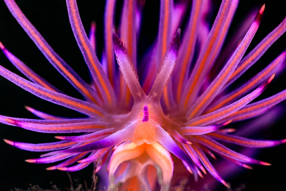 Close Up Portrait of a Nudibranch