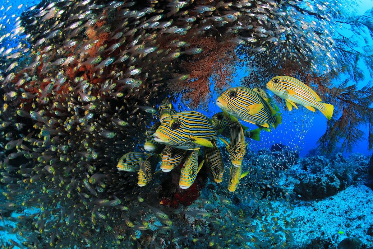 Raja Ampat Reef in Indonesia