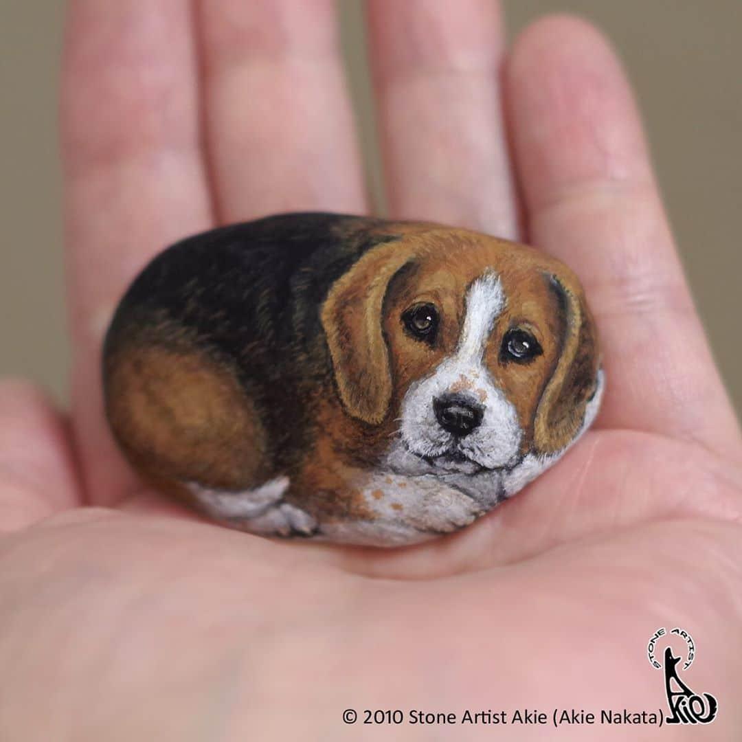 Beagle Rock Animal