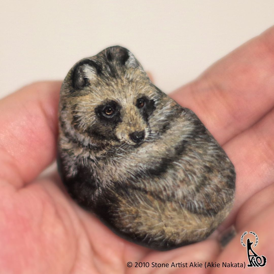 Racoon Painted on a Rock